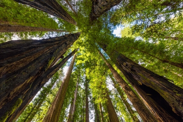 Coastal Redwoods | Emerald Forest Cabins and RV